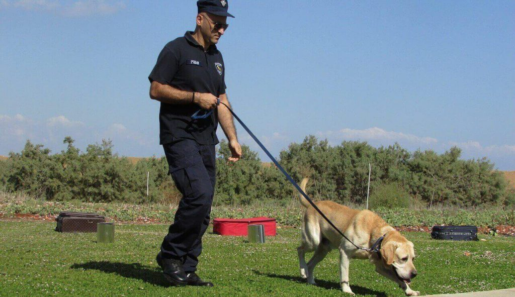 Labrador Training Tips, sniffer dogs