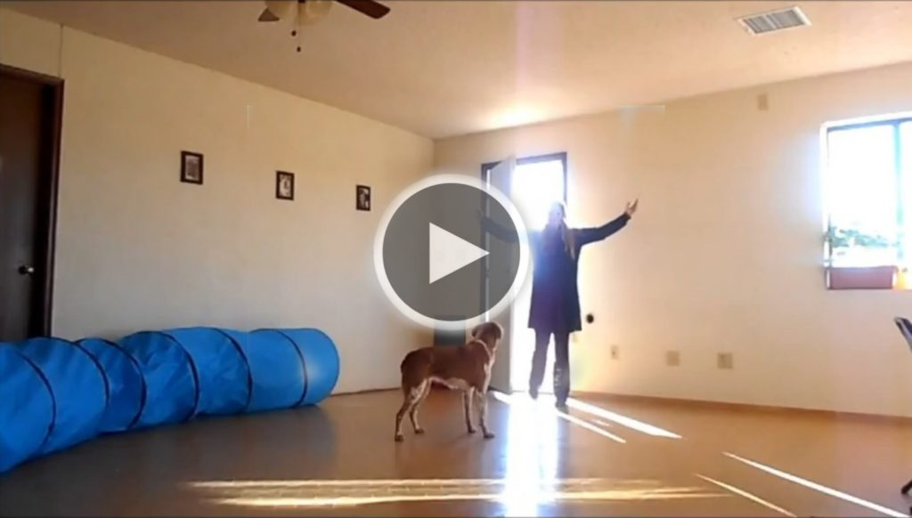 braintraining4dogs
