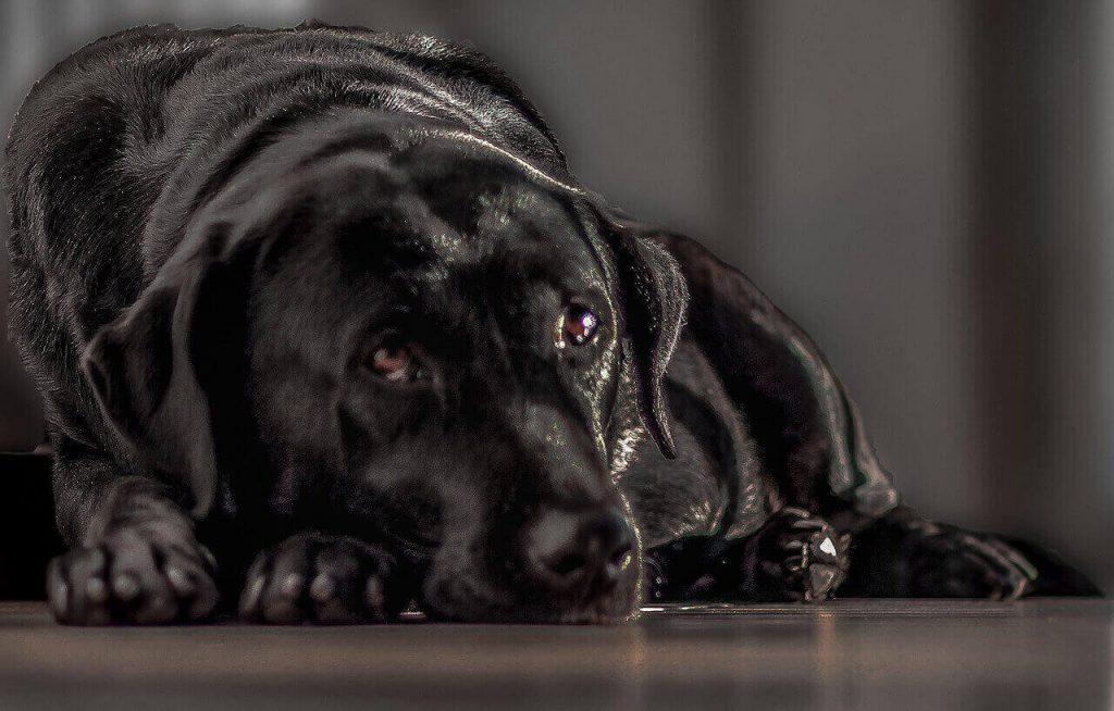 Senior dog anxiety at night