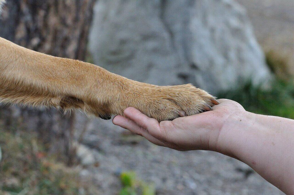 5 Things You Should Know About Labrador Dew Claw