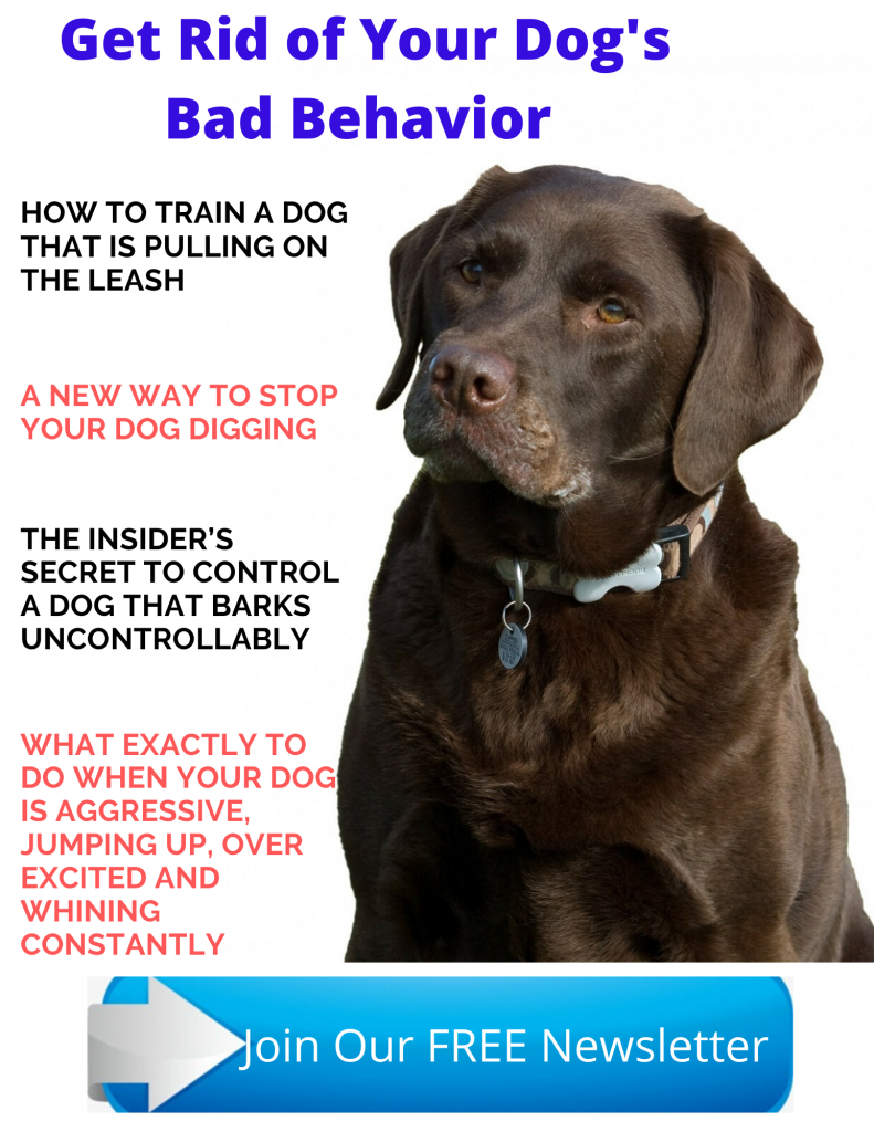 Get Rid of Your Dog's Bad Behavior