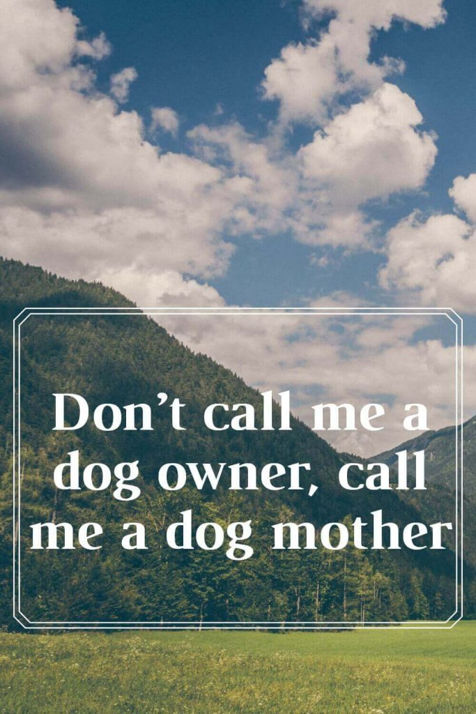 Don't call me a dog owner, call me a dog mother.