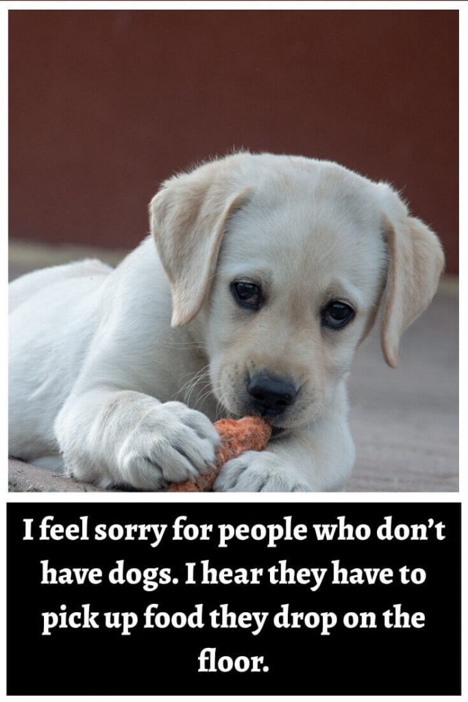 I feel sorry for people who don't have dogs. I hear they have to pick up food they drop on the floor.