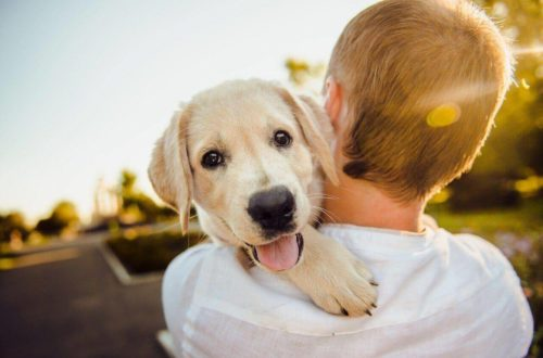 Are Labs good with kids?